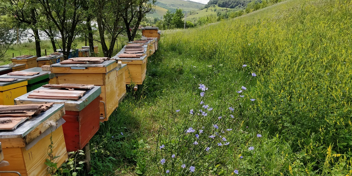 Visiting the Bee Hives