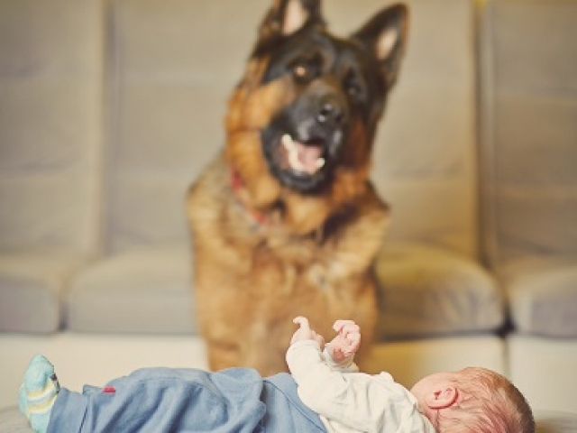 best friends, dogs, baby