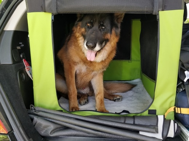 dog crate, fabric, collapsible, fabric made collapsible crate