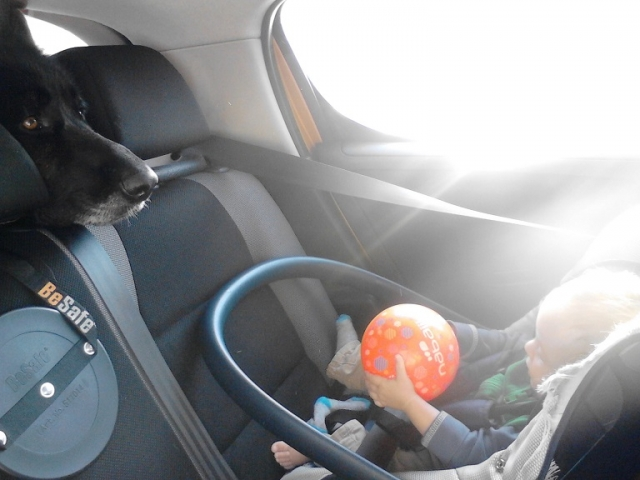 rear back seat, dog, baby, kid
